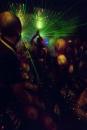 Furball in Club Akhnaton