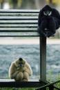 Apen op eiland in Artis